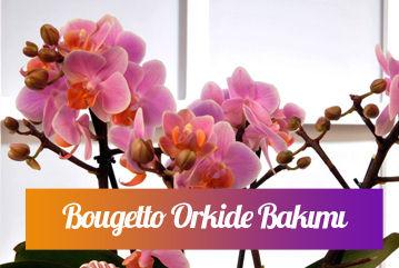 Bougetto Orkide bakımı nasıl yapılır?