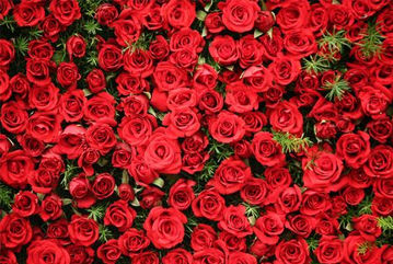 Güller hakkında bilgi