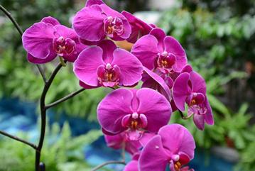 Orkide bakımı hakkında bilinen yanlışlar