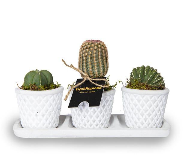Üçlü Kaktüs Tasarımı