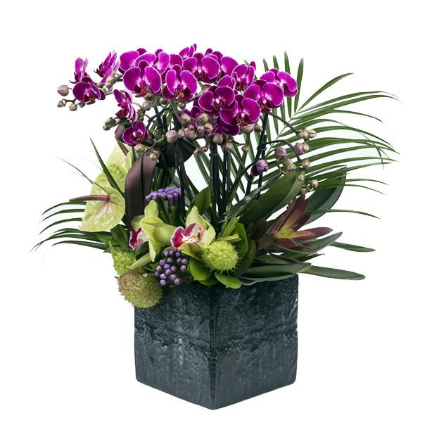 Bahçeşehir Mini Orkide Tasarımı