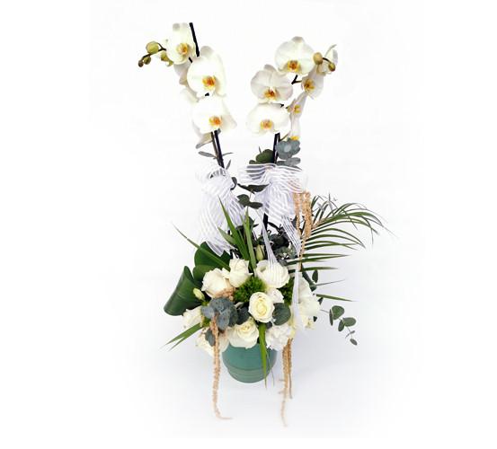 Beylikdüzü Orkide Siparişi