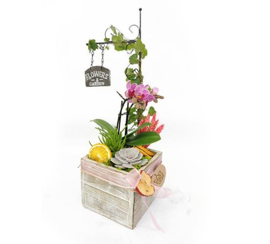 Flowers Garden Mini Orkide Tasarımı