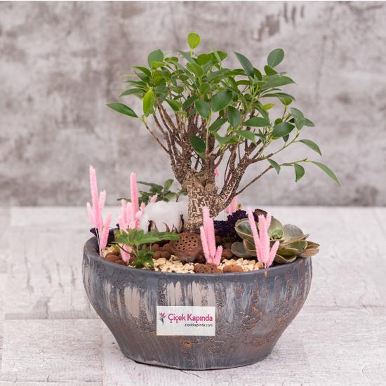 Son Nefesim Minyatür Bonsai