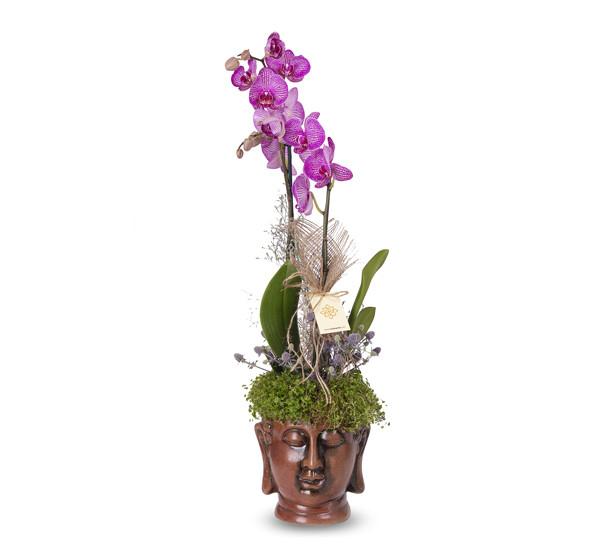 Özel Saksıda İki Dal Orkide