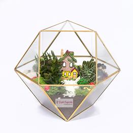 Piramit Cam Ýçinde 5 Adet Sukulent Bitkisi, Doðal Yosun ve Aksesuarlar Kullanýlarak Hazýrlanmýþ Teraryum Çalýþmasý