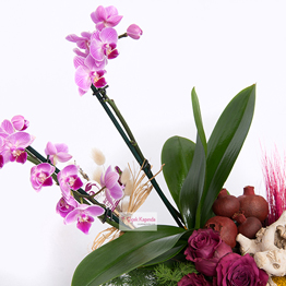 Kalbimin Sultanı Orkide