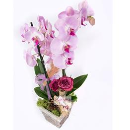 Cennet Gözlüm Orkide