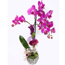 Enerjimin Kaynağı Sevgilim Orkide