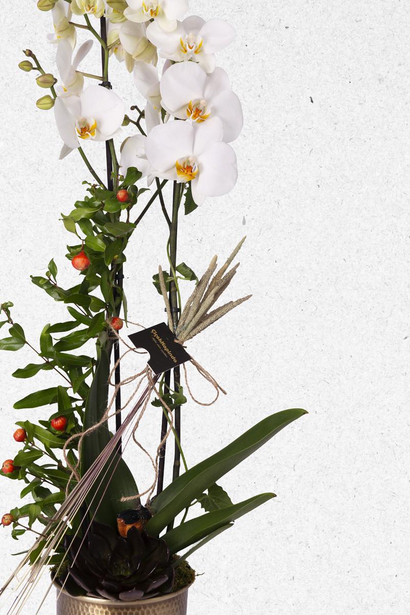 beyaz orkide aranjmanı