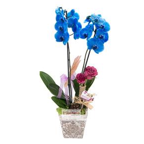 Beylikdüzü Mavi Orkide