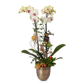 Çiftli sarı orkide aranjmanı