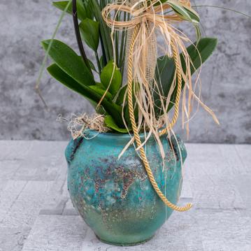 İki Dallı Beyaz Orkide