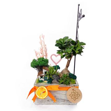 Saksıda Işıklı Mini Bonsai